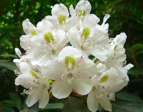 Plantele ornamentale pentru gradina ta