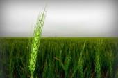 Tratamente fitosanitare pentru o gradina perfecta
