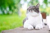 Hrana pisici de la magazinul online Petshopexpres