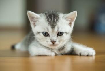 Cel mai bun pet magazin online cu hrana uscata pentru pisici  de la Nova Food