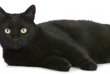 De ce trebuie sa apelam la hrana uscata pisici