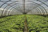 Află de ce este atât de important agricultura pentru omernire în viața de zi cu zi