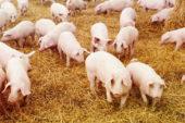 Ce informații ascunde de fapt o ramură cunoscută a agriculturii, zootehnia