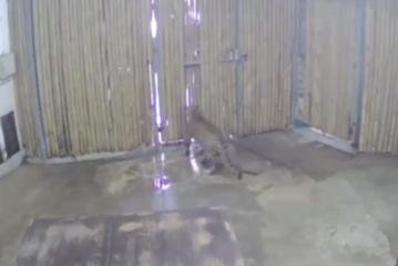 Un copil de 2 ani a fost atacat de un leopard la o grădină zoo