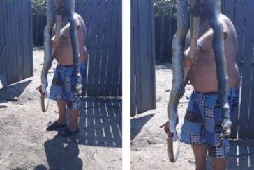 A fost ucis un șarpe de mari dimensiuni în Tulcea, protejat de lege