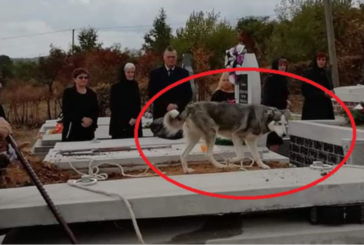 Ce sentimente a avut câinele când a fost la înmormântarea stăpânului său