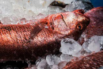 Inspectorii au depistat peste 22 000 kg de pește colorat, cu miros și lipicios