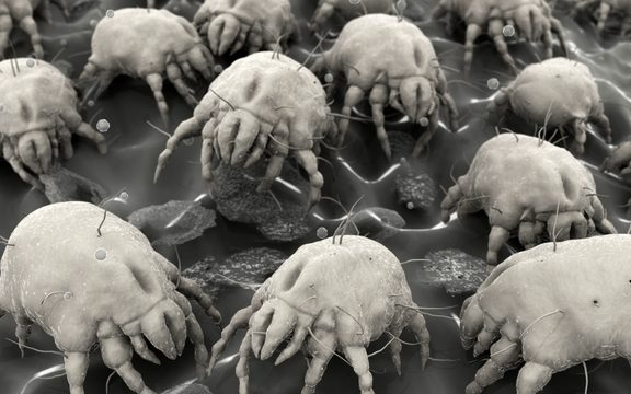 Știai că în porii feței tale trăiesc sute de arahnide minuscule?